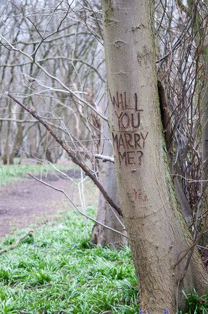 onto: Marriage proposal message carved onto the trunk of a tree Stock Photo