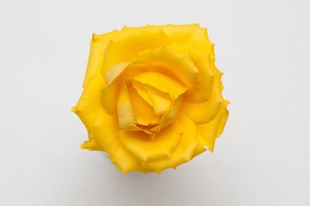 directly above: Close up of a bright yellow rose head viewed from directly above Stock Photo