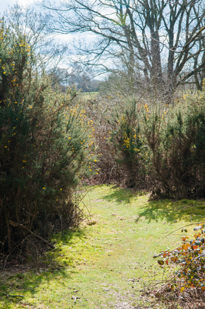 grassy: Grassy pathway through flowering hedgerow in the woods Stock Photo