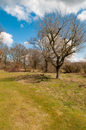 ''wide angle'': Wide angle view of a countryside meadow framed by trees