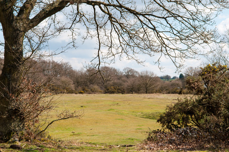 rambling: Wide angle view of a countryside meadow framed by trees