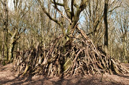 man made structure: Large stick den built around a tree in the forest