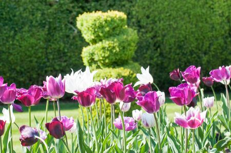 landscaped garden: Close up of a flower bed in a landscaped garden with a hedge in blurred in the background
