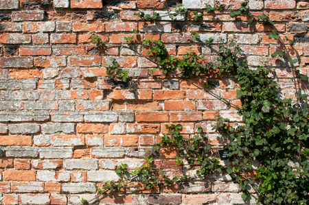 paredes de ladrillos: la pared exterior de ladrillo en sunlilght con el daño a TFHE ladrillo