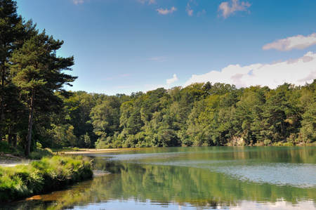rambling: Beautiful landscape scenery of calm water in a trnquil forest lagoon