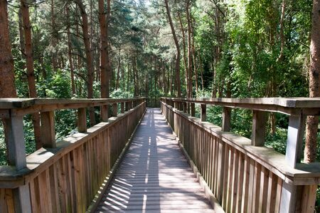 Wooden footbridge crossing high up over a forest. Looking down from above the trees Stock Photo