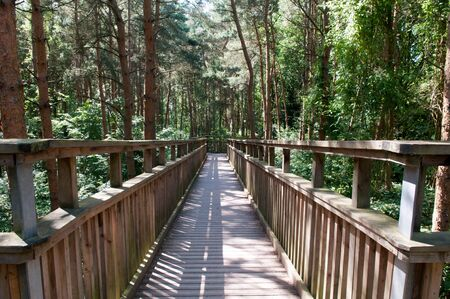 adventuring: Wooden footbridge crossing high up over a forest. Looking down from above the trees Stock Photo