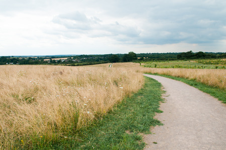 ramble: Winding path through long, tall grass in a sunny summer meadow