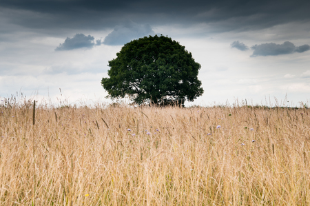 atmospheric: Dramatic sky over field with solitary tree. Moody and atmospheric tone. Concept for loneliness.