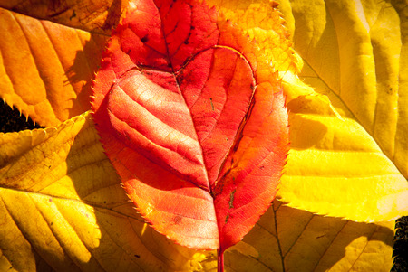 Caring for the planet concept of love heart in a leaf