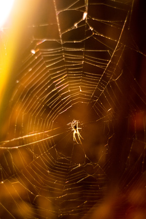 Spider in a spider web at night Stock Photo