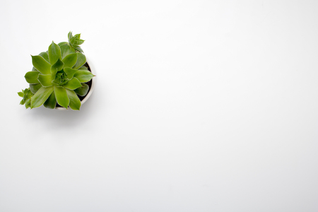 Green succulent plant on modern white office desk, top view 스톡 콘텐츠