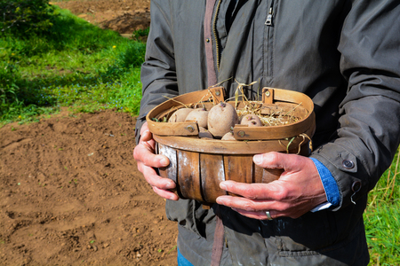 Planting potatoes outside to grow your own vegetables