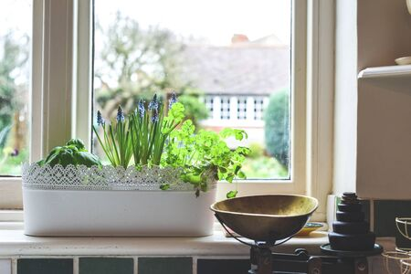 Window box with herb garden and spring bulbs growing in a home kitchen interior Фото со стока