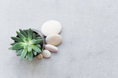 Small potted succulent plant with white pebbles on light grey surface