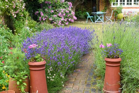 Landscaped garden with lawn and flowers growing in flower beds