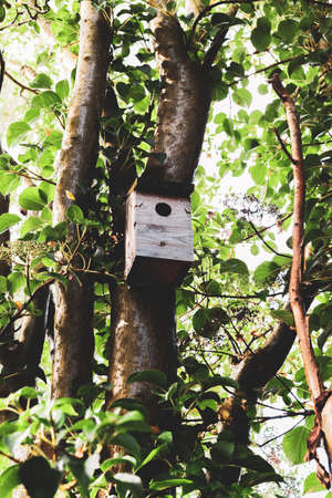 Wooden bird box attached to a tree in a garden Stock Photo