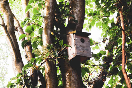 Wooden bird box attached to a tree in a garden Фото со стока