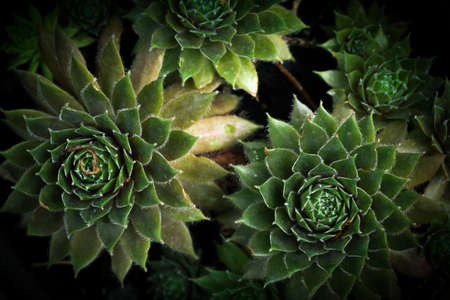 Small green succulent plants growing in natural sunlight