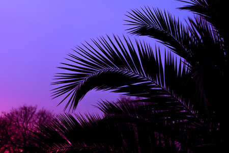Tropical plant and tree leaf make a silhouette pattern over beautiful sunset sky