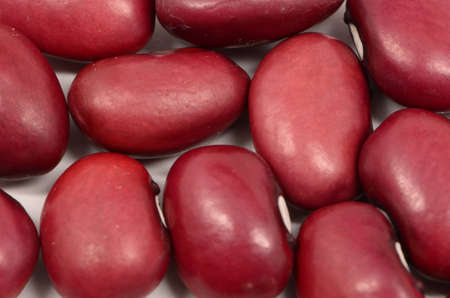 Micro Of  Red Kidney  Beans