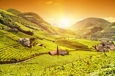 Beautiful sunset view over a vineyard in Bolzano, Italy