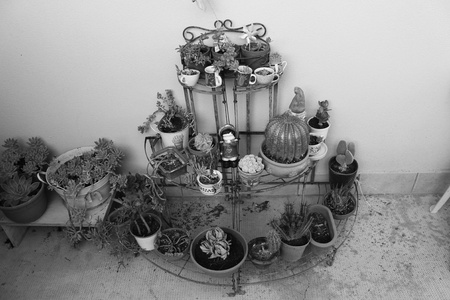 Succulents and objects in the garden (Pesaro, Italy)