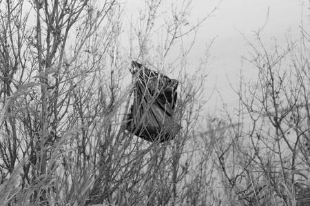 Garbage bag on the tree - Environmental preservation (Pesaro, Italy, Europe)