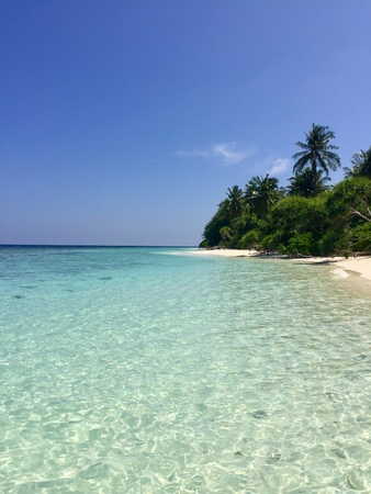 Palm beach in Maldives (Ari Atoll) 免版税图像