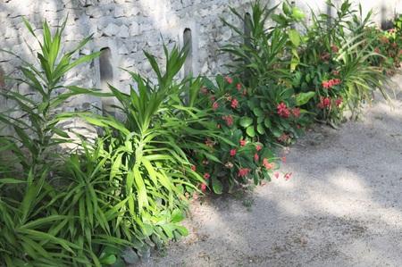 Plants in the ground on the street (Ari Atoll, Maldives) 免版税图像