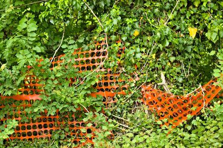 Orange construction site net in a bush (Pesaro, Italy, Europe)