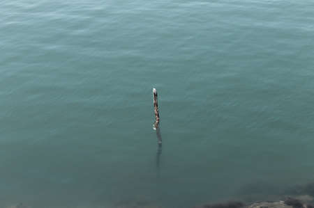 An isolated branch that comes out of the surface of the water (Pesaro, Italy, Europe)
