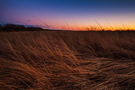 草原地帯の草地は夕暮れ時の照明の夕日に照らされて。