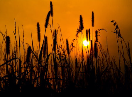 grassfield: Backlit prairie image with a golden sky towards evening