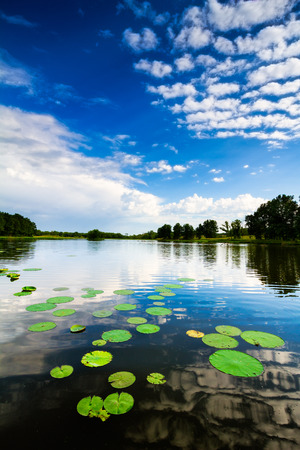 lily pads: Reflections of clouds in a pond with lily pads