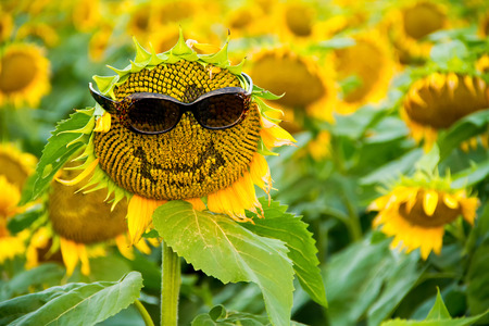 A sunflower in a field with a smile and a pair of sunglasses on.