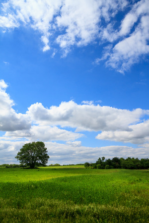 A lone tree seperate from the other trees in a lush grassland field