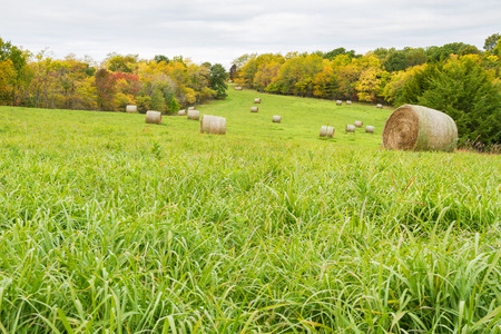 crop harvest: Hay Field during the fall time with hay bales. Stock Photo