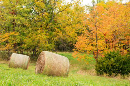 cropland: Two hay bales sitting in a field surrounded by trees with fall colors.