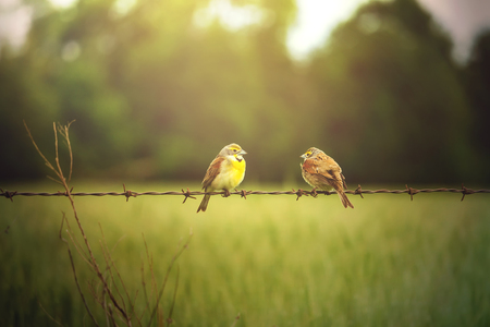 wire fence: Two birds sitting on a stand of wire watching each others back for safety.
