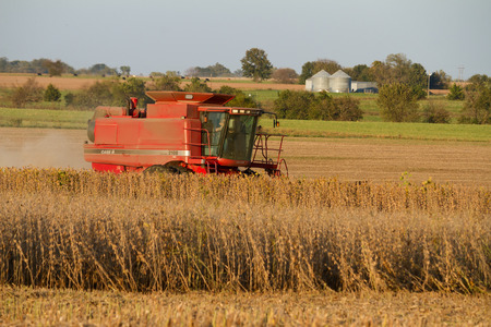 Lowry City, Missouri10132017Farmer in a Case Combine Harvester, harvesting soybean out of a field while on the phone