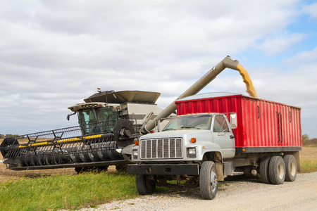 American farmer harvesting soybean into a truck to take to a market using a combine