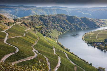 vin: Vin at Mosel Valley Stock Photo