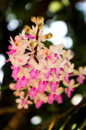 purple orchid tillansia usenoides ten photo