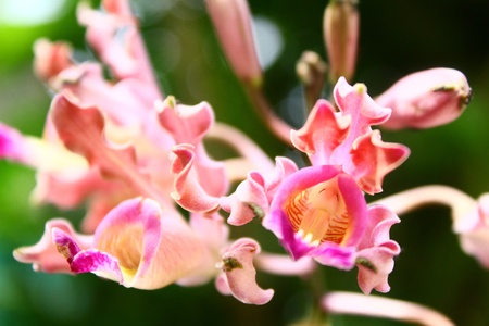 bouquet of pink orchids two photo