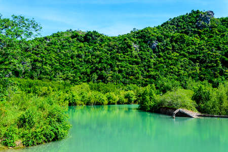 mangrove forest: mangrove forest and blue river