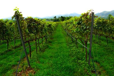 hua hin: vineyard new destination travel in hua hin thailand