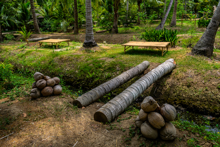 way of life coconut farmer and garden in amphawa thailand
