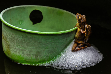 small frog  breeding on water in house