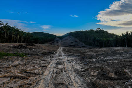 Forest invasion Cultivated ground for oil palm and rubber